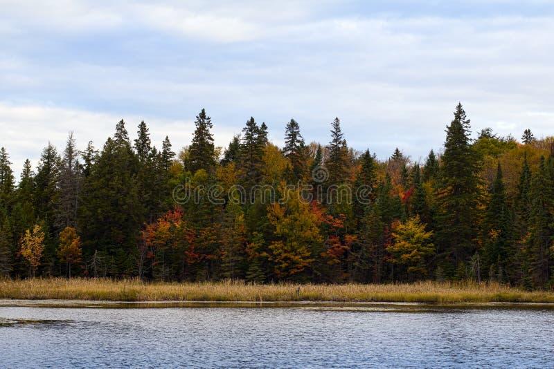 秋天的阿尔根金族公园 库存图片