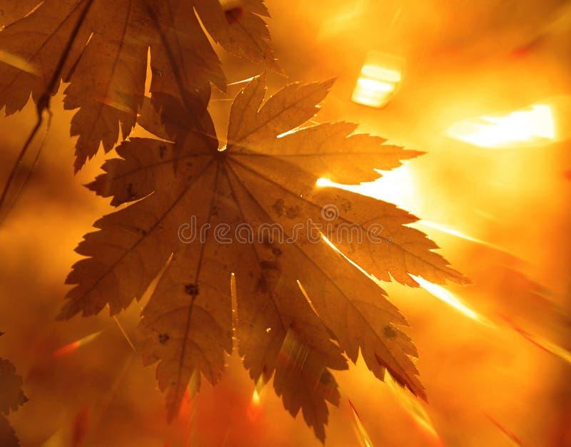 秋季设计 免版税库存图片