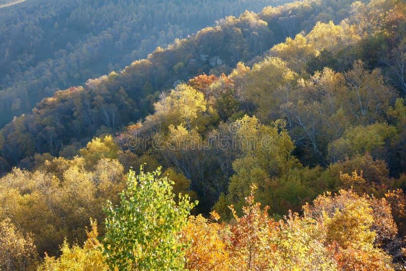 秋季风景 免版税图库摄影
