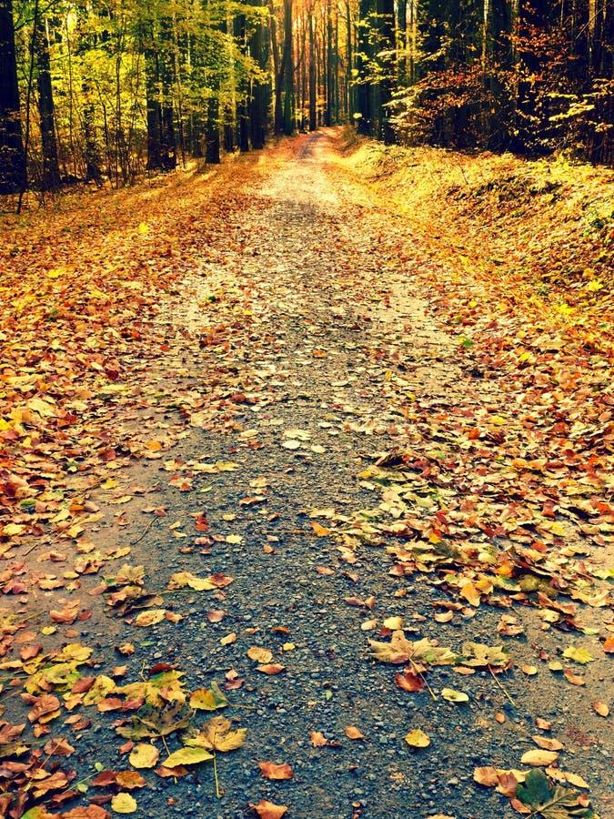 秋季 太阳通过在道路的树在金黄森林里 免版税库存图片
