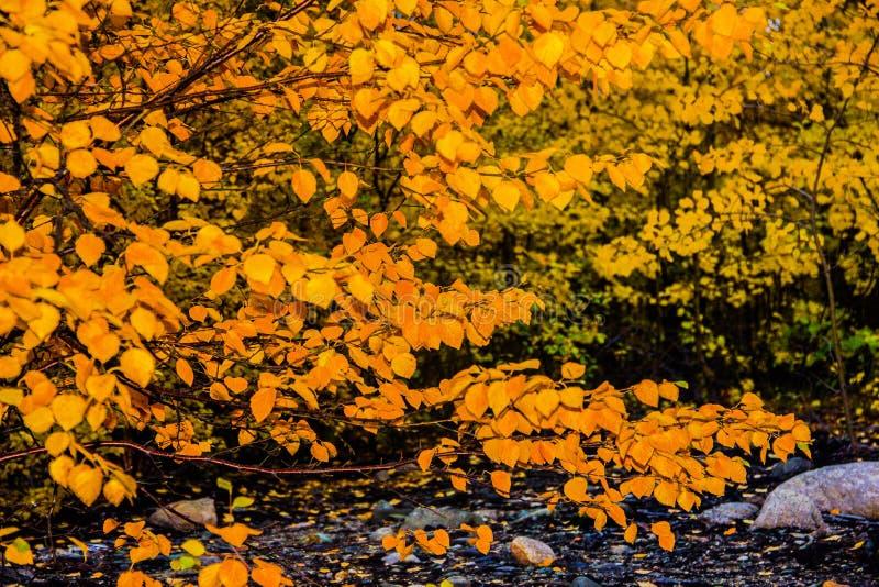 秋林自然 阳光的自然景观 自然奇观 免版税库存照片