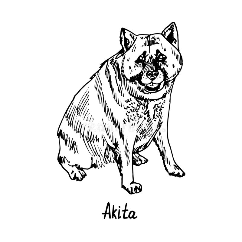 秋田秋田inu,日本秋田,坐美国张力的品种,与题字的手拉的乱画剪影狗,被隔绝 库存例证