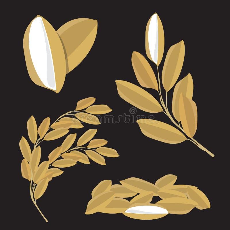 水稻种子传染媒介自然未加工的食物设计 库存例证