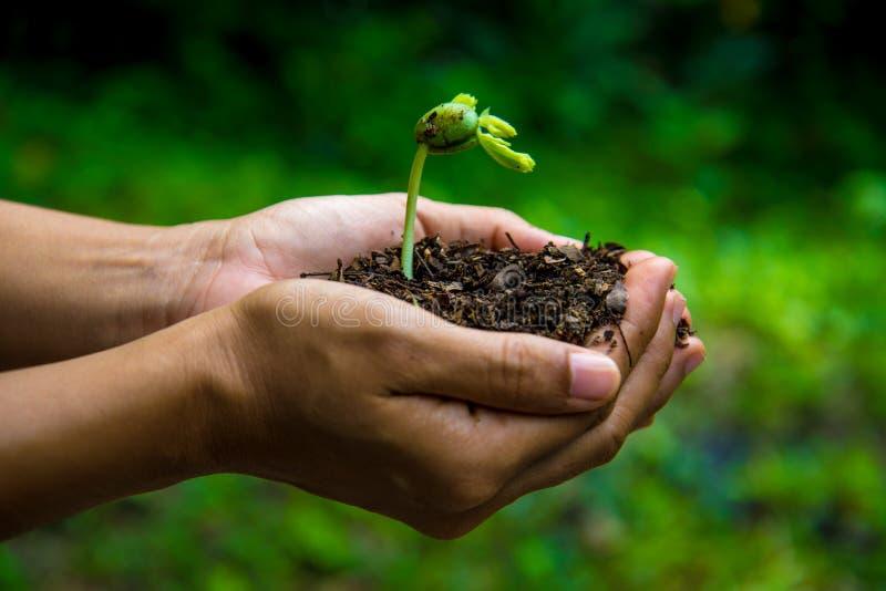种子和土壤在手上种植的 免版税库存照片