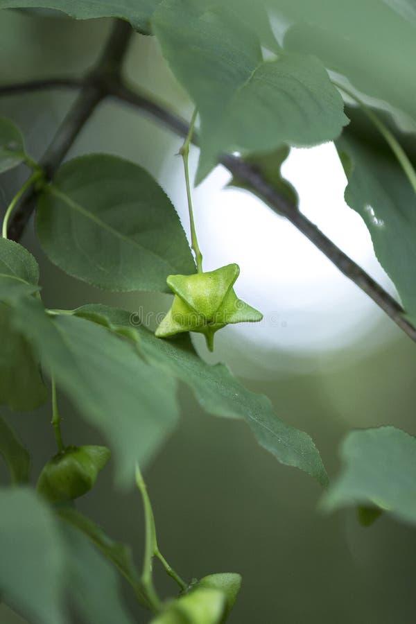 种子在树增长 库存图片