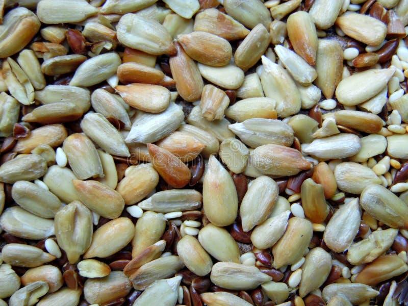 种子的混合 免版税库存照片