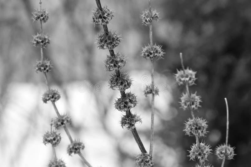 种子荚的样式 库存照片
