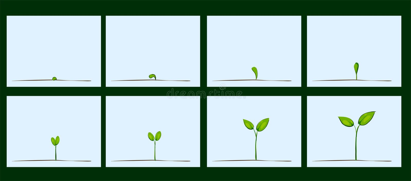 种子萌芽的动画在土壤的 库存例证