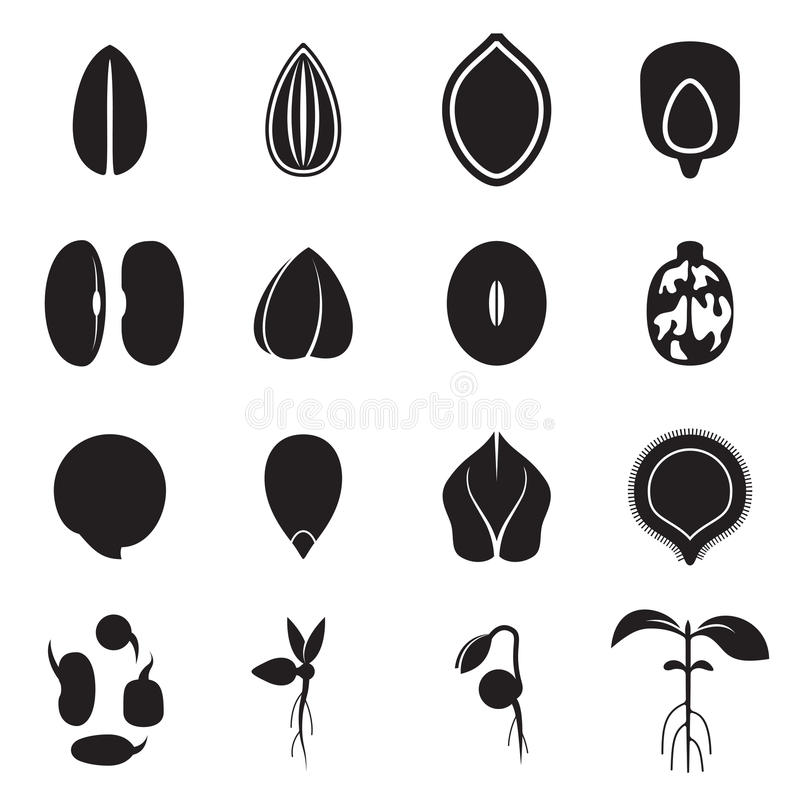 种子象集合,代表庄稼种子的最共同的类型 库存例证