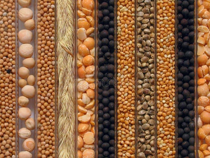 种子 免版税库存照片