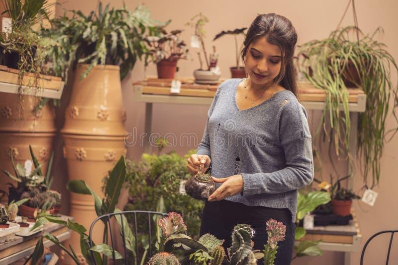 种植一个罐的妇女花匠仙人掌植物自温室 工作在仙人掌庭院的女工 库存照片