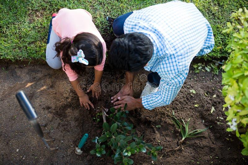 种植一棵树的父亲和女儿在庭院里在后院 库存照片