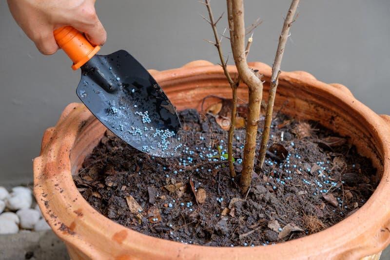 种植一棵树 免版税库存图片