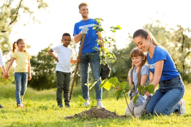 种植与志愿者的孩子树 免版税库存图片