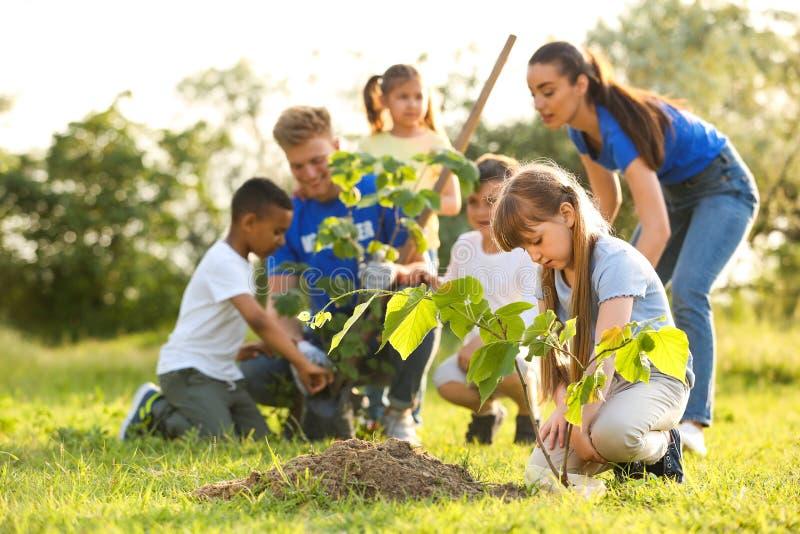 种植与志愿者的孩子树 库存图片