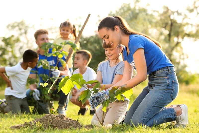 种植与志愿者的孩子树 库存照片