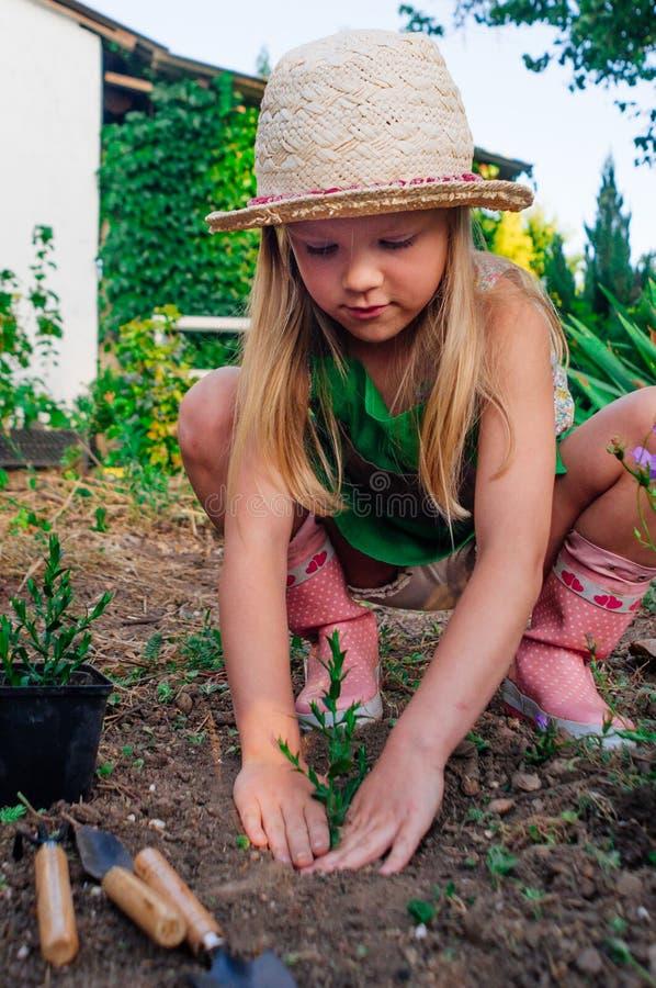 种植从罐的女孩植物室外 免版税库存照片