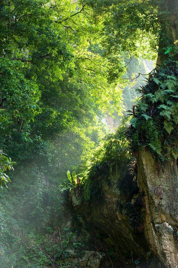 种植光束结构树 免版税库存图片