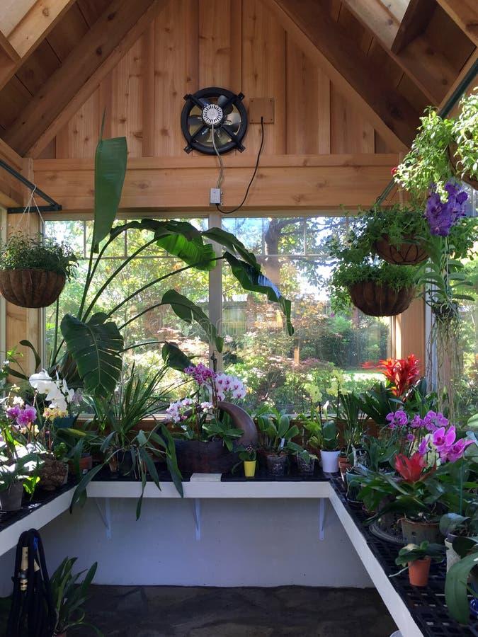 种植兰花的温室内部 免版税库存照片