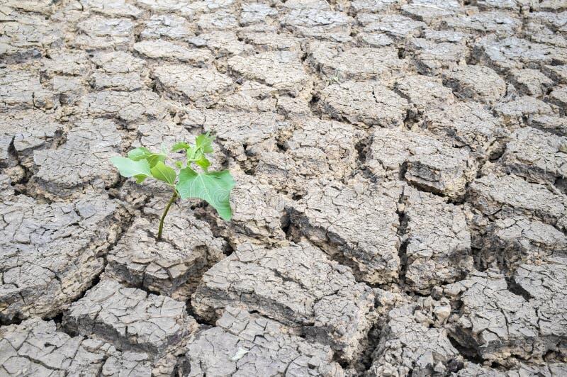 种植发芽在干破裂的河床土壤 库存照片