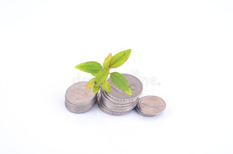 种植发芽从一个小组硬币白色背景 到达天空的企业概念金黄回归键所有权 免版税图库摄影