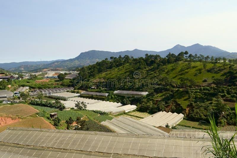 种植园、农场和温室越南的山的 图库摄影