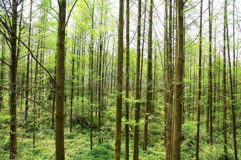 种植园森林地 库存照片