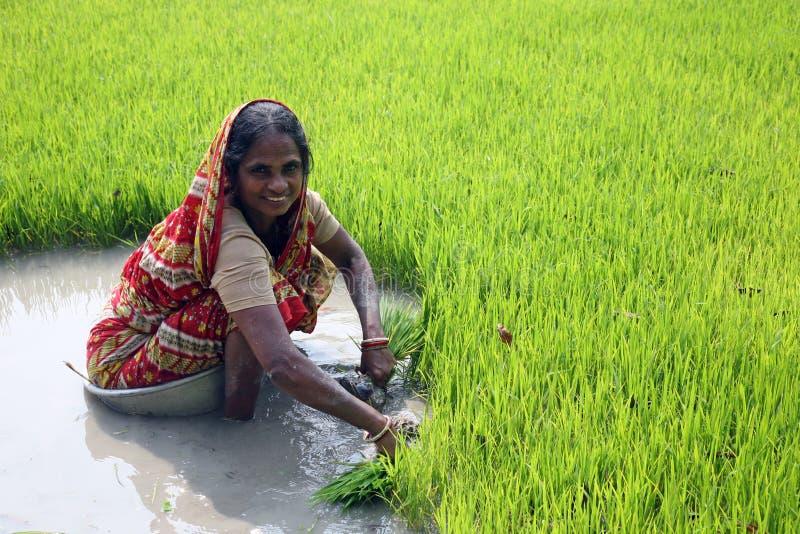 种植园米妇女工作 免版税图库摄影