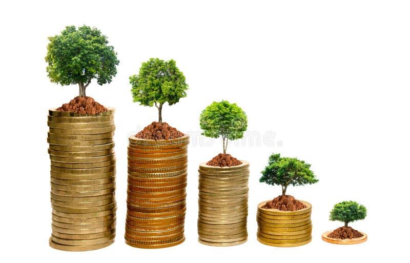 种植在一枚银币的树在从背景完全地被分离两只手的手上 免版税图库摄影