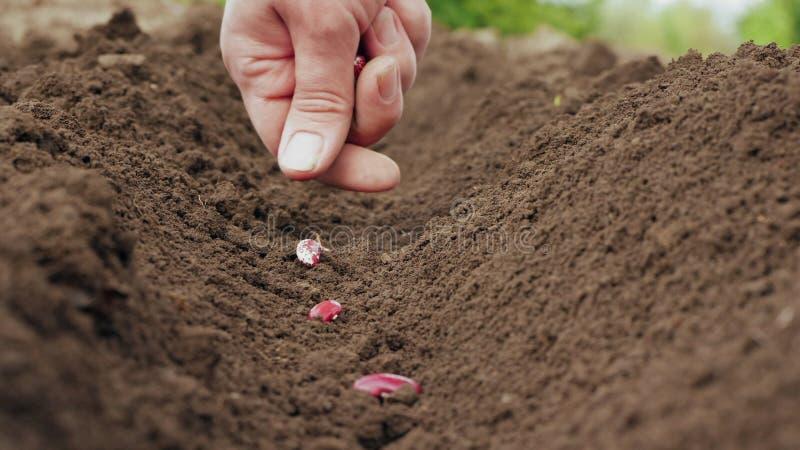 种植在土壤的农夫的手一颗种子 库存照片