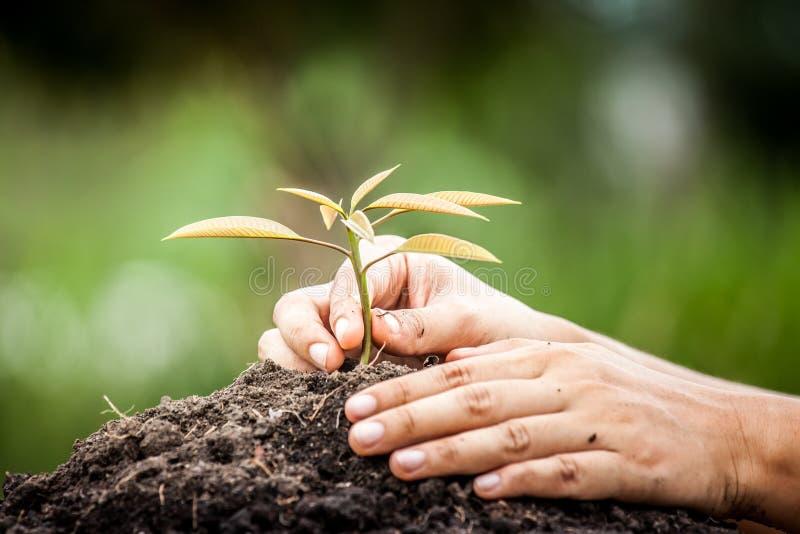 种植在土壤的特写镜头手年轻树在绿色背景 免版税库存图片