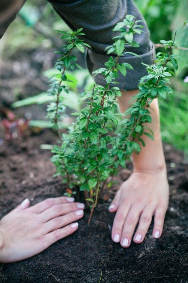 种植在地面上的花 免版税库存图片