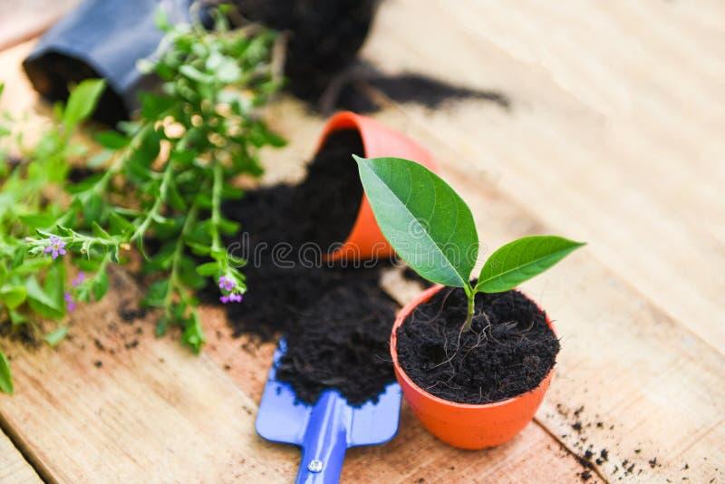 种植在罐的花有在木背景的土壤的-工作园艺工具小植物在后院 免版税库存图片
