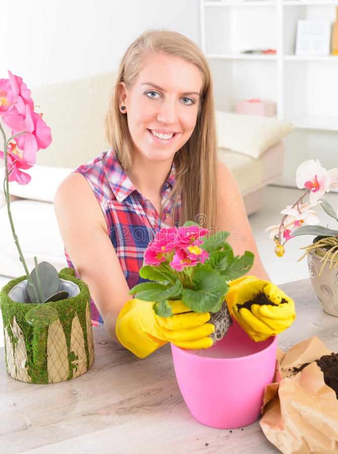 种植在花盆的colorfull花 免版税库存照片