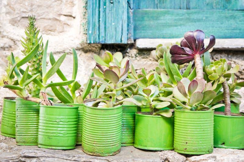 种植多汁植物 免版税图库摄影