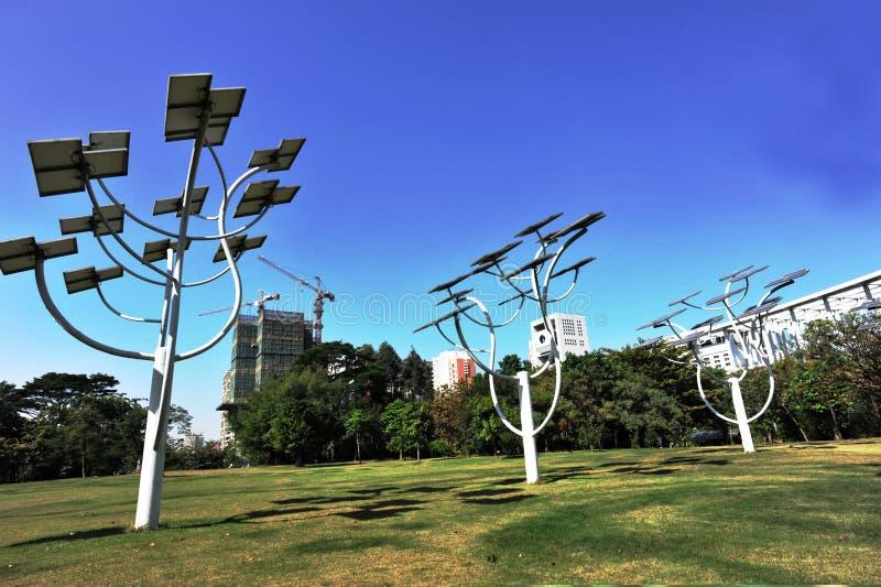 种植太阳结构结构树 库存图片