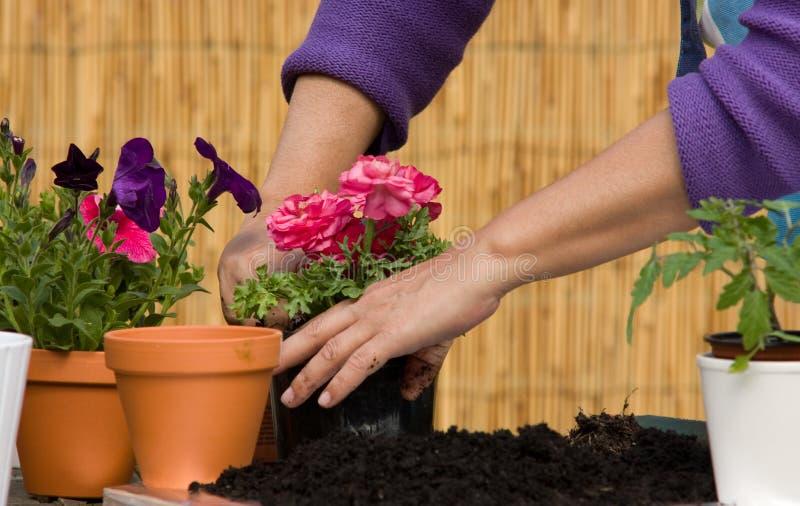 种植妇女的花 免版税库存图片