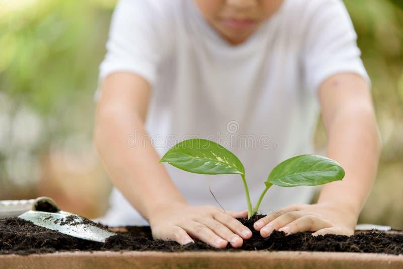 种植小的幼木的年轻泰国男孩 免版税图库摄影
