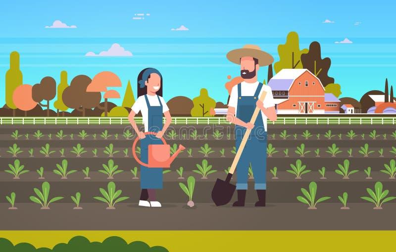 种植幼木植物菜人妇女花匠的夫妇农夫使用的铁锹和农业的喷壶 向量例证