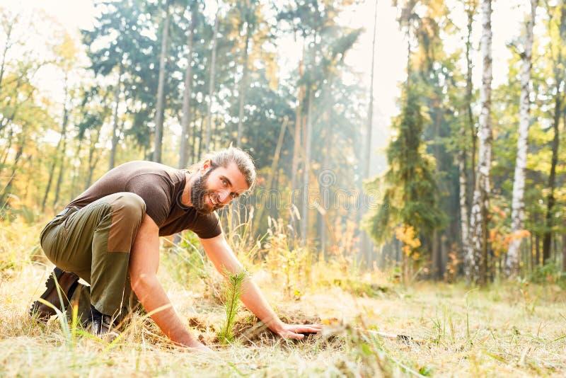 种植幼木的森林工作者 库存照片