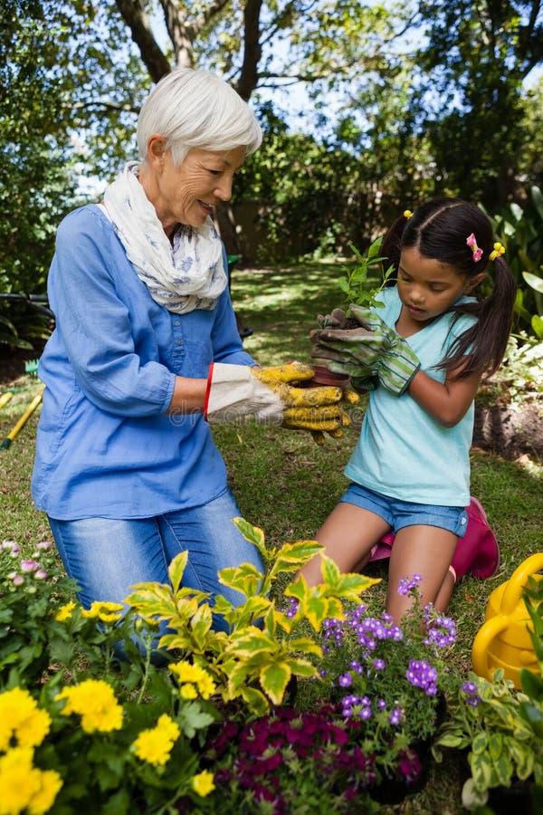 种植幼木的祖母和孙女 库存图片