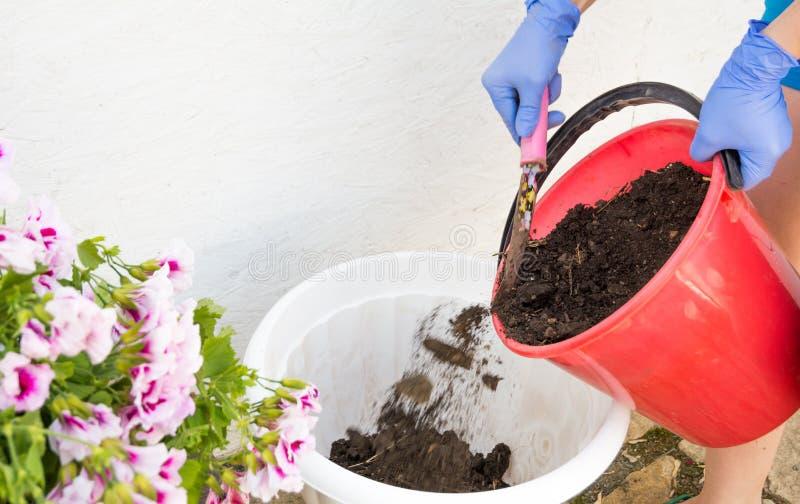 种植春天花在庭院里 种植花的花匠妇女在庭院里 r 库存照片