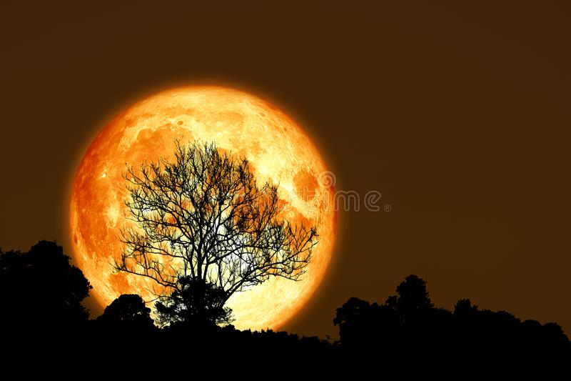 种植月亮后面剪影干燥分支树的超级玉米 库存图片