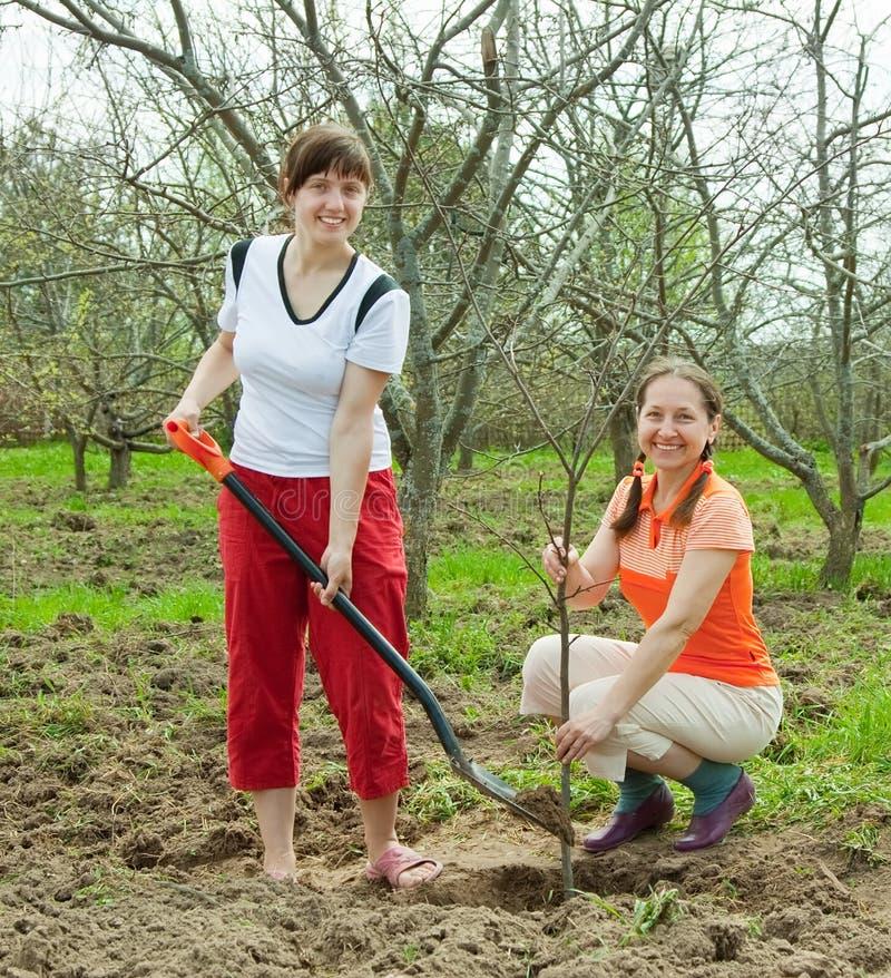 种植果树的愉快的妇女 免版税库存图片