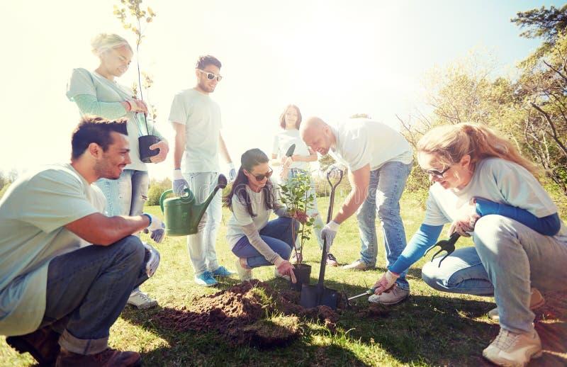 种植树的小组志愿者在公园 库存照片