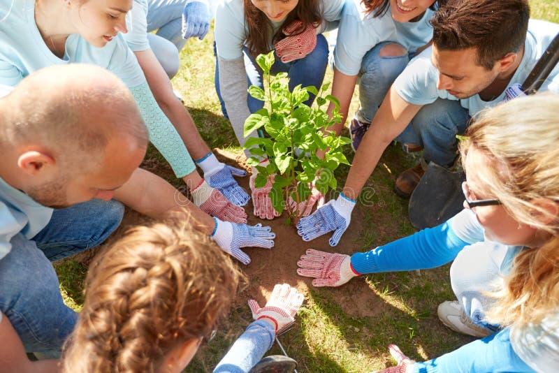 种植树的小组志愿者在公园 库存图片