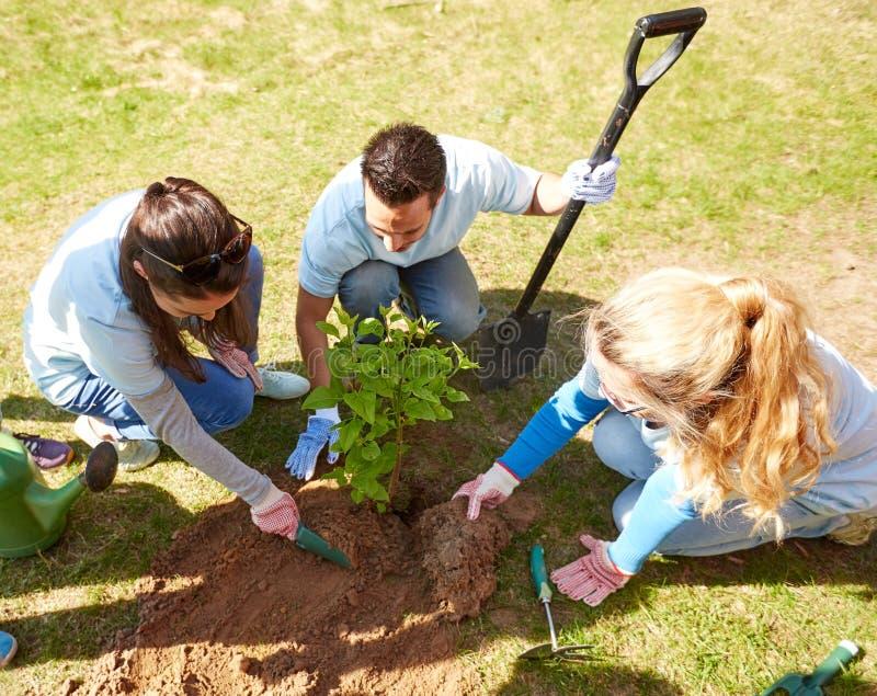 种植树的小组志愿者在公园 免版税库存照片