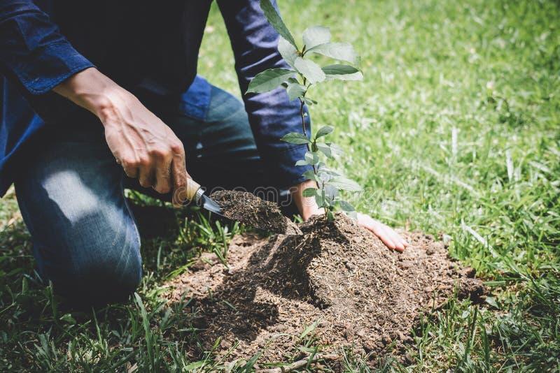 种植树,年轻人的两只手种植生长入土壤的幼木和树,当工作在庭院里作为救球时 图库摄影