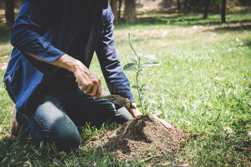 种植树,年轻人的两只手种植生长入土壤的幼木和树,当工作在庭院里作为救球时 库存图片