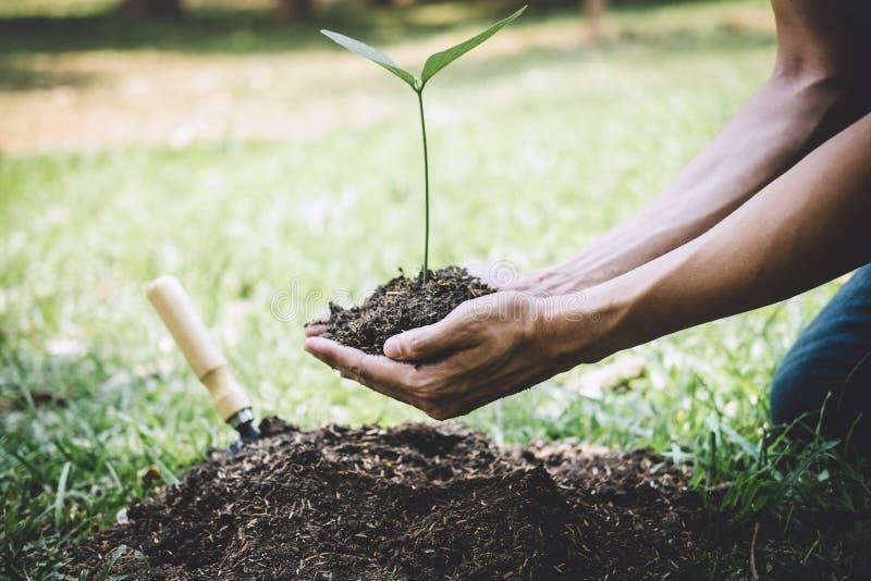 种植树,年轻人的两只手种植生长入土壤的幼木和树,当工作在庭院里作为救球时 库存照片